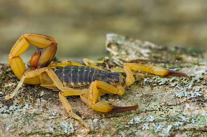 escorpioes-em-areas-urbanas
